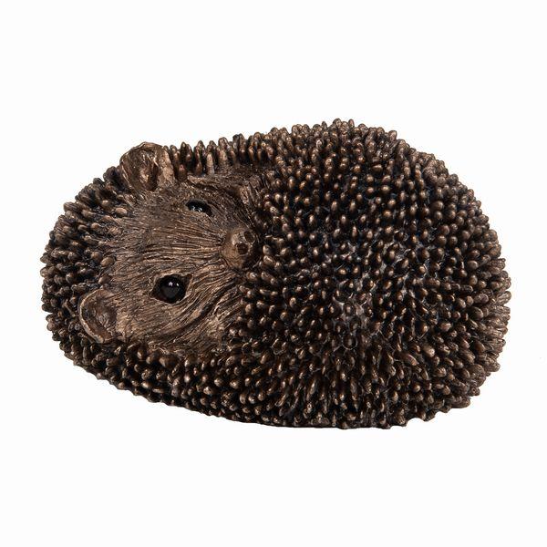 Zippo - Baby Hedgehog asleep