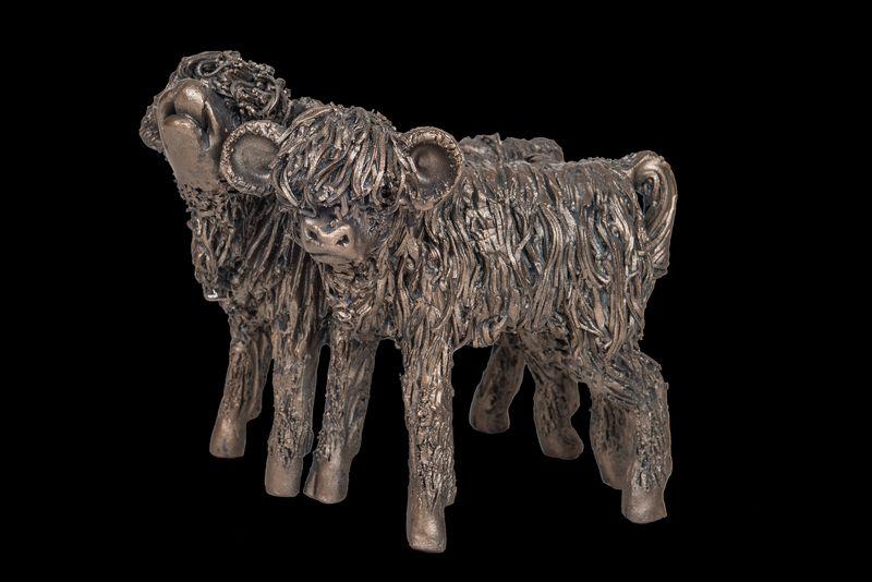 Highland Heifer Calves