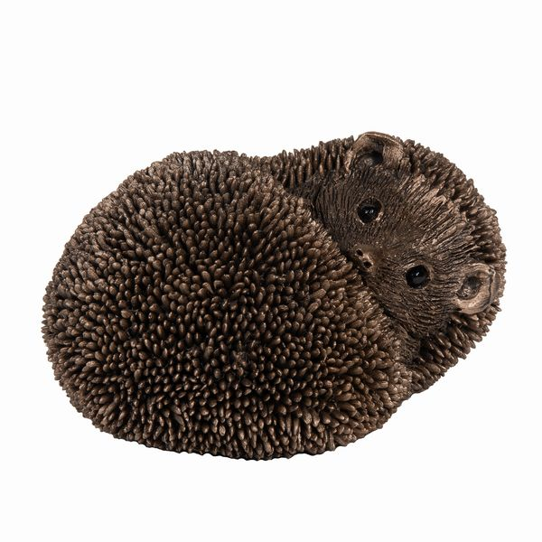 Spike - Hedgehog resting