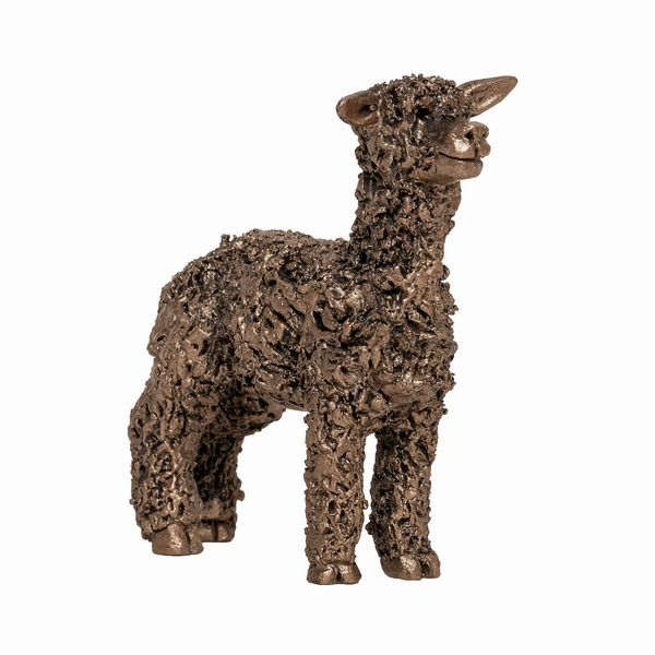 Miniature Alpaca standing