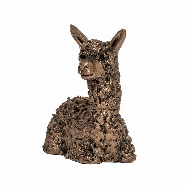 Miniature Alpaca sitting