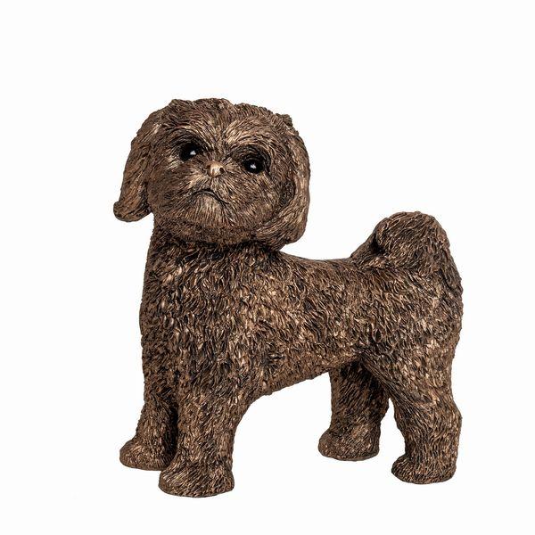 LuLu - Shih Tzu Puppy